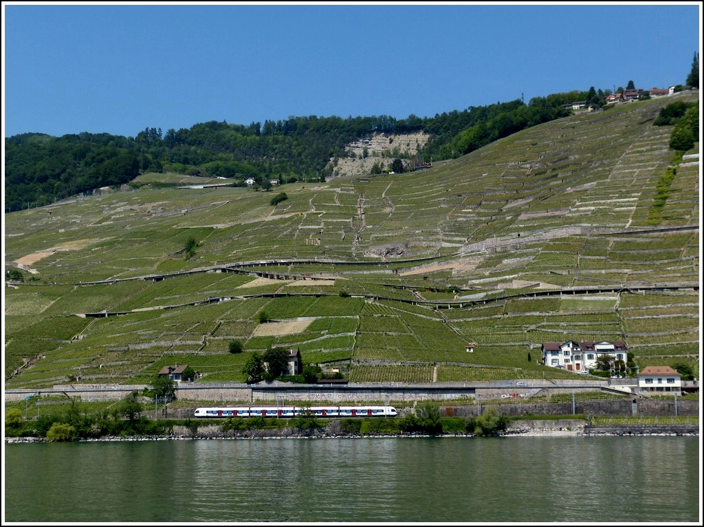 A Flirt is running along the vine terraces of Lavaux on May 26th, 2012.