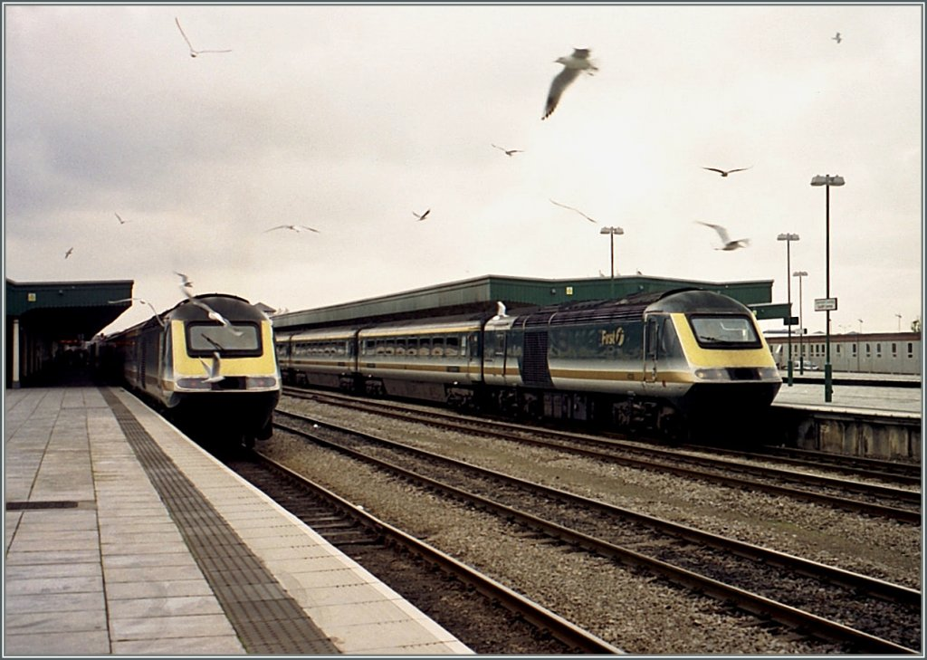 Birds... 