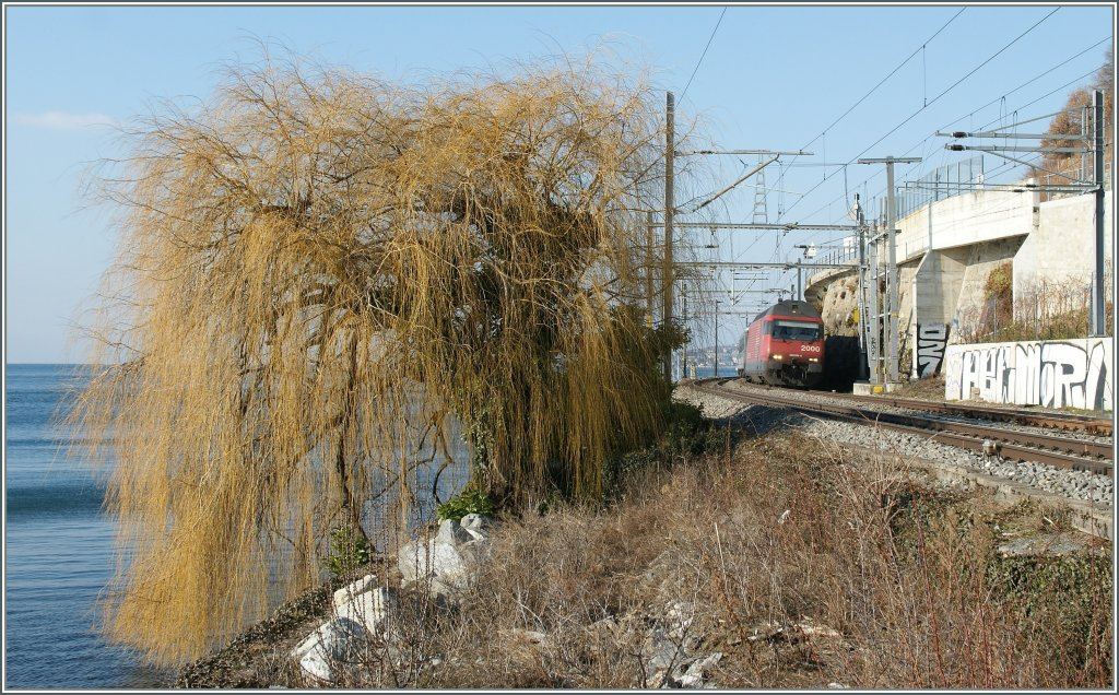More tree tan train - Re 460 by Rivaz.