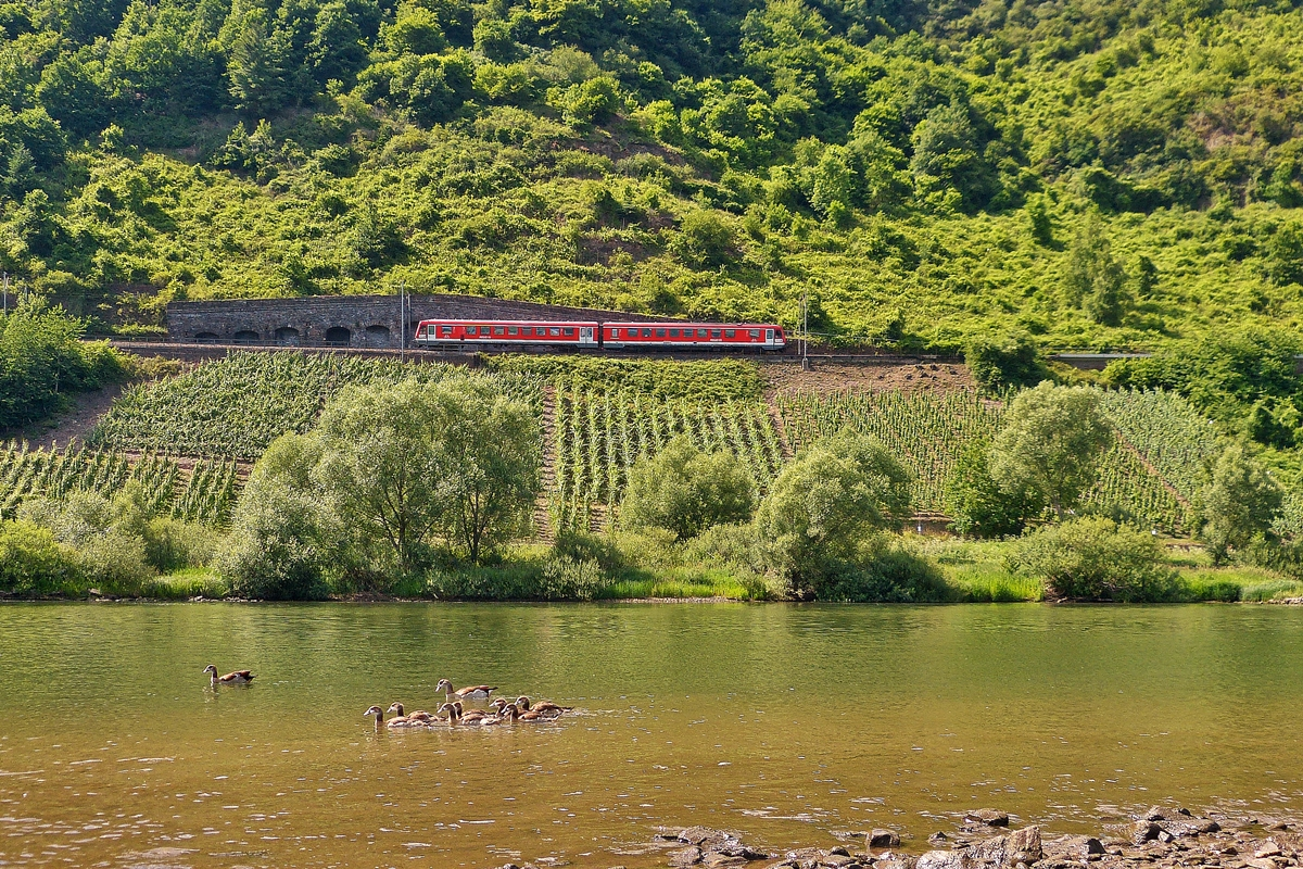 . A local train from Traben-Trarbach to Bullay is running on the Mosel track near Pünderich on June 21st, 2014.