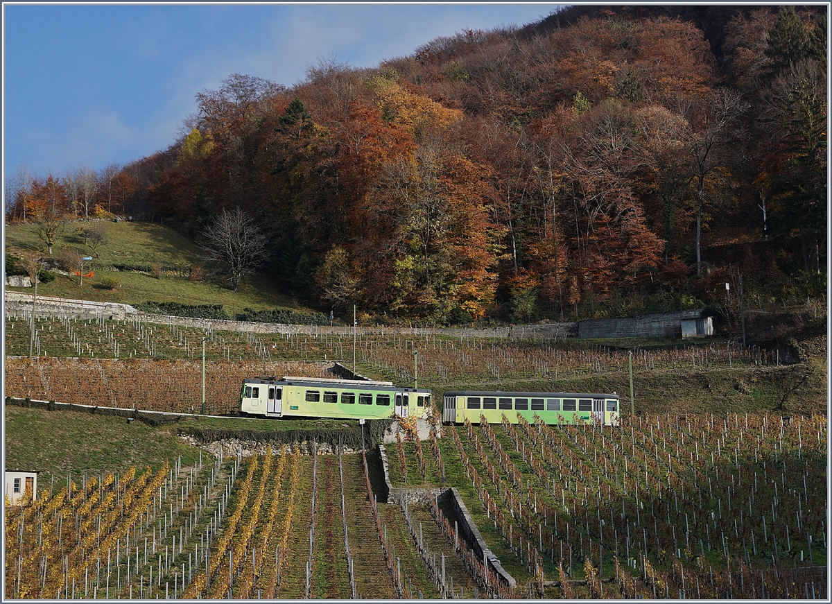 A ASD local train in the vineyards over Aigle.