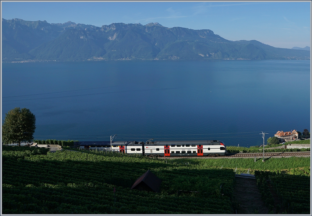 A early summer mornign on the Vineyard-Line by Chexbres wiht an SBB RABe 511.