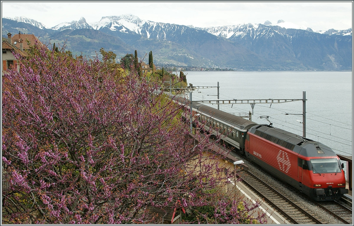 Spring times by St Saphorin: Re 460 wiht an IR to Geneva.