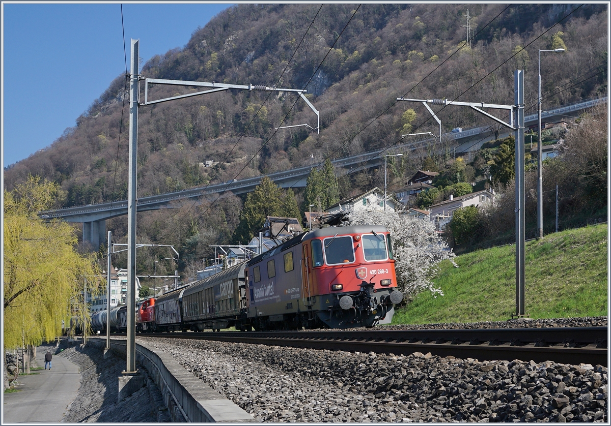 The SBB Re 420 288-3 with a Cargo Train near Villeneuve.