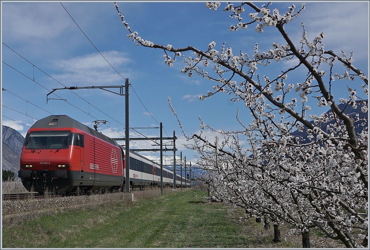 The SBB Re 460 037-5 with an IR to Geneva between Saxon and Charrat Fully.