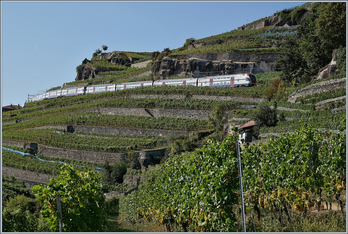 Two SBB RABe 511 on the Train des Vignes Line over St Saphorin. (SBB Summertimetable, works on Lausnne - Bern line).