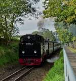 The RüBB steam engine 99 1784-0 is hauling its wagons out of the station of Binz (LB) on September 22nd, 2011.