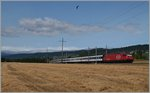 Summer on the Lausanne - Geneve line: A Re 460 wit an IR near Perroy.