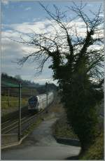 A old tree and a new train; a SBB RABe 511 on the way to Genève near Bossière.
