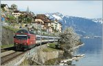 The SBB Re  460 099-5 wiht an IR by St Saphorin.