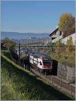 The SBB RABe 511 111 on the way to Romont near Bossiere.